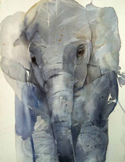 Elephant Blues - 76x56cm